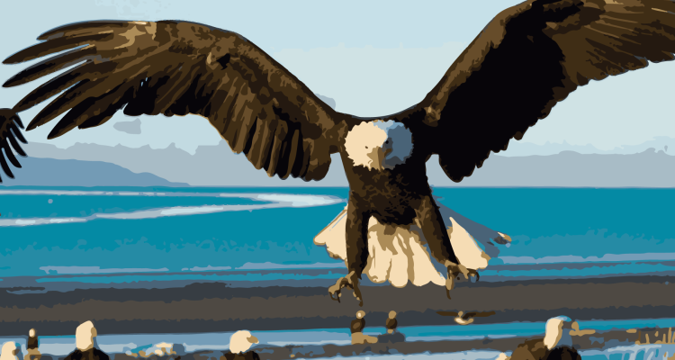 bird-eagle-sea-landing-wings